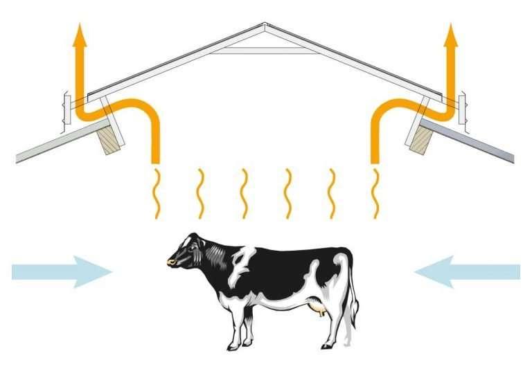Diagram of ventilation on a dairy cow using light ridge